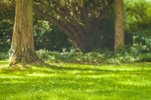The First Mow of the Season - Helping Your Lawn Through the Start of Spring