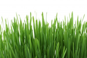 Help Your Lawn Survive the Summer